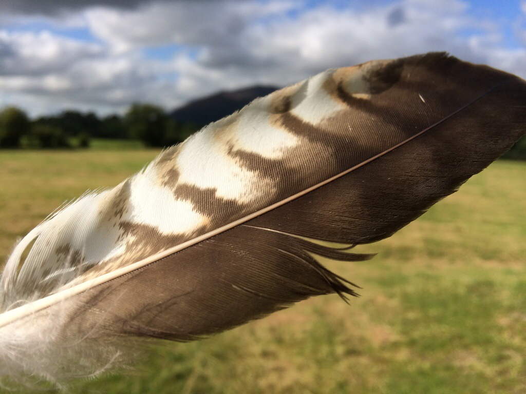 Blessings #200 – The Buzzard Feather