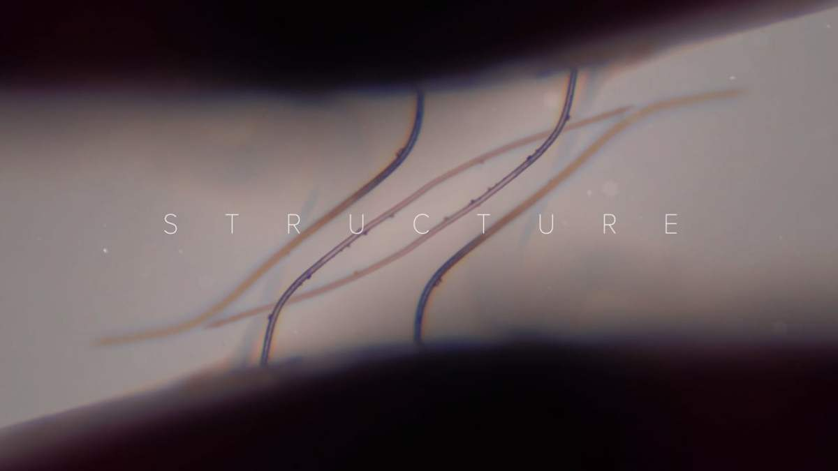 "Because it's Friday: ""Structure: A Microscopic Landscape in 4k"" by Drew Geraci"